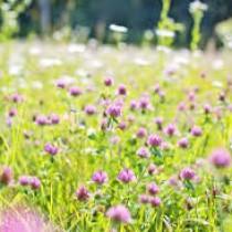 """""""Un mare di fiori"""" a Villa Durazzo 8 – 9 Ottobre 2016"""